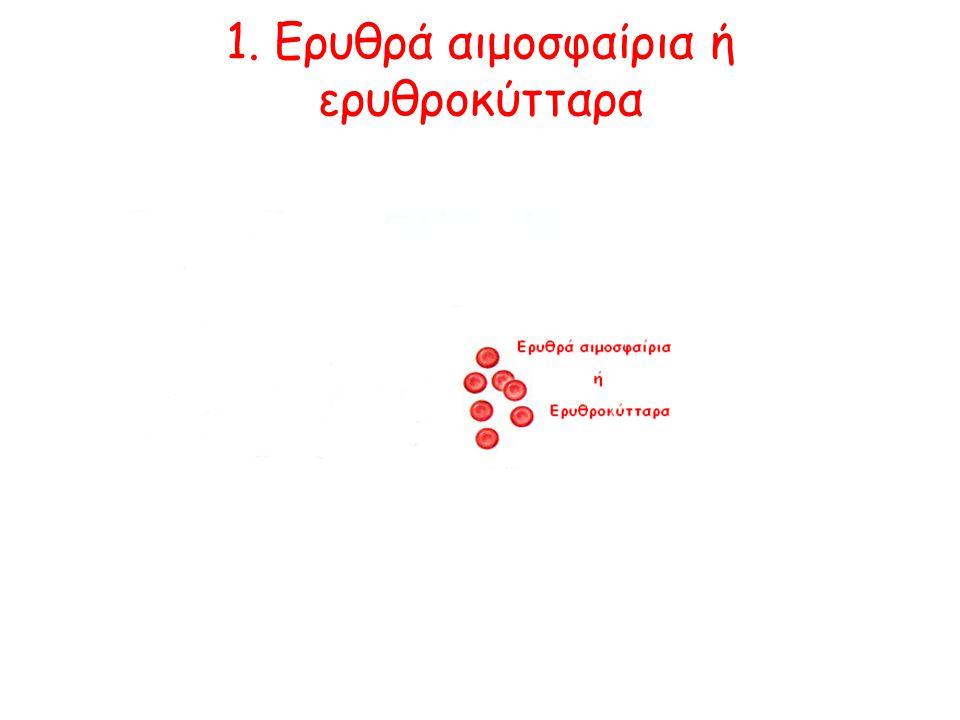 2. Λευκά αιμοσφαίρια ή λευκοκύτταρα