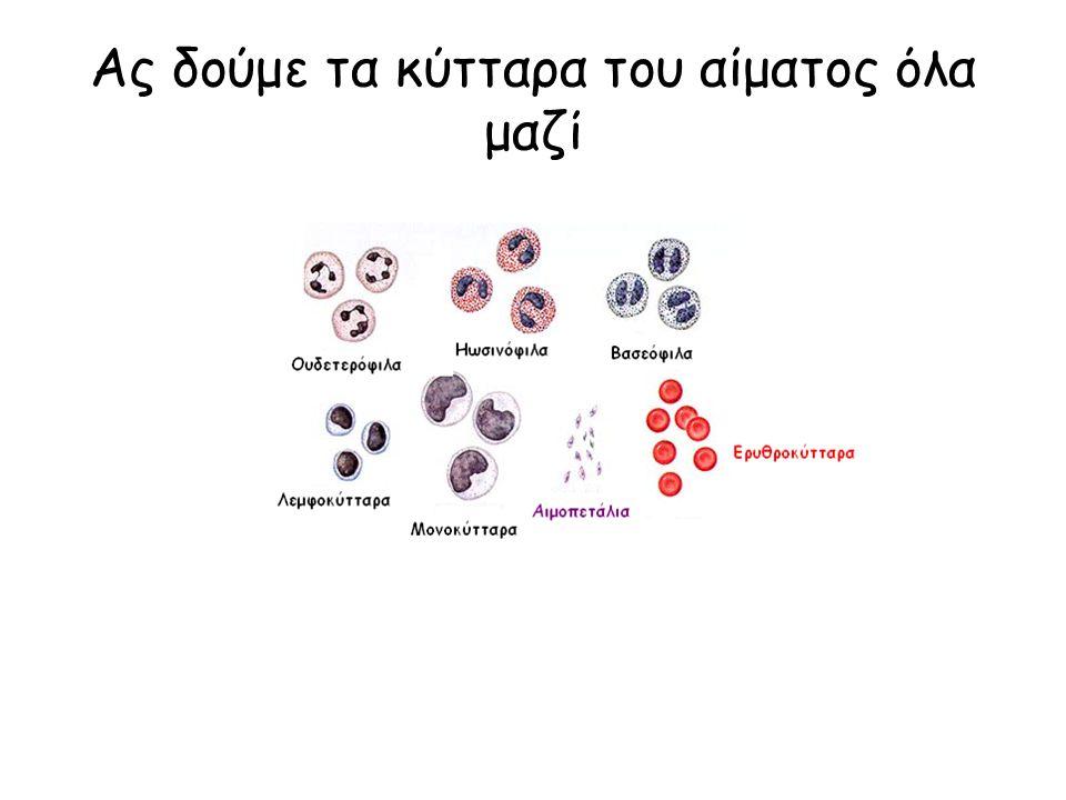 Ας δούμε τα κύτταρα του αίματος όλα μαζί