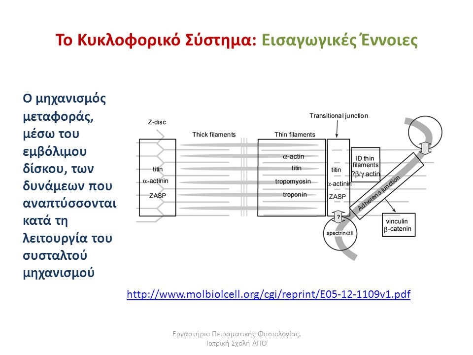 Εργαστήριο Πειραματικής Φυσιολογίας, Ιατρική Σχολή ΑΠΘ Το Κυκλοφορικό Σύστημα: Εισαγωγικές Έννοιες Ο μηχανισμός μεταφοράς, μέσω του εμβόλιμου δίσκου, των δυνάμεων που αναπτύσσονται κατά τη λειτουργία του συσταλτού μηχανισμού http://www.molbiolcell.org/cgi/reprint/E05-12-1109v1.pdf