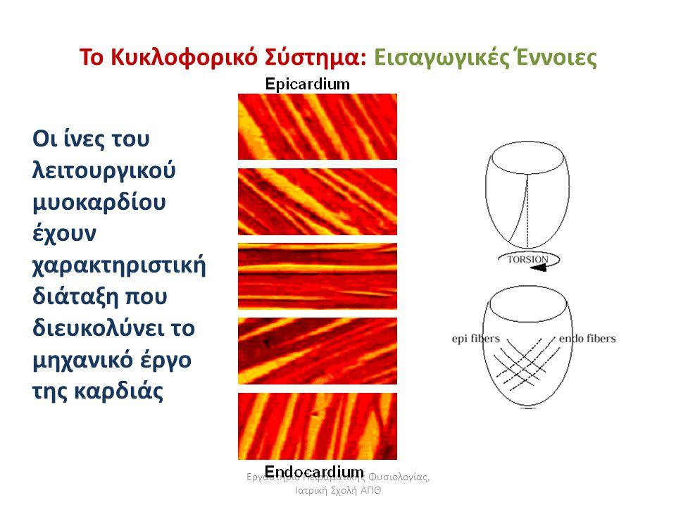 Εργαστήριο Πειραματικής Φυσιολογίας, Ιατρική Σχολή ΑΠΘ Το Κυκλοφορικό Σύστημα: Εισαγωγικές Έννοιες Οι ίνες του λειτουργικού μυοκαρδίου έχουν χαρακτηρι