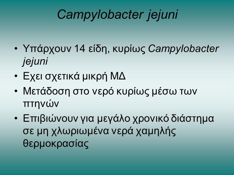 Campylobacter jejuni •Υπάρχουν 14 είδη, κυρίως Campylobacter jejuni •Εχει σχετικά μικρή ΜΔ •Μετάδοση στο νερό κυρίως μέσω των πτηνών •Επιβιώνουν για μ