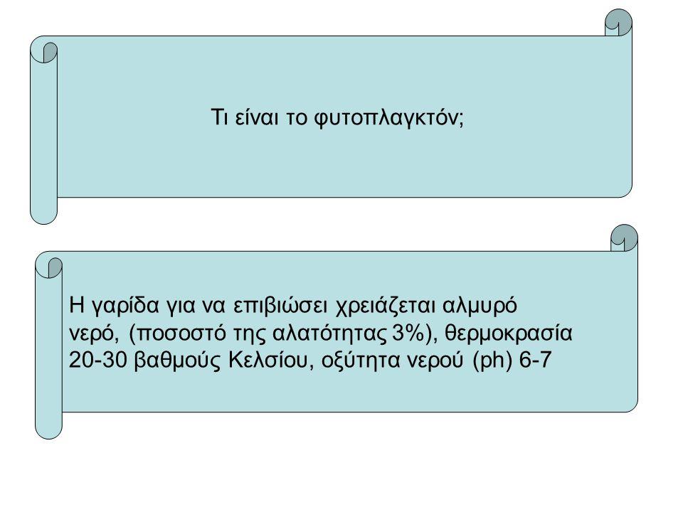 Τι είναι το φυτοπλαγκτόν; Η γαρίδα για να επιβιώσει χρειάζεται αλμυρό νερό, (ποσοστό της αλατότητας 3%), θερμοκρασία 20-30 βαθμούς Κελσίου, oξύτητα νερού (ph) 6-7