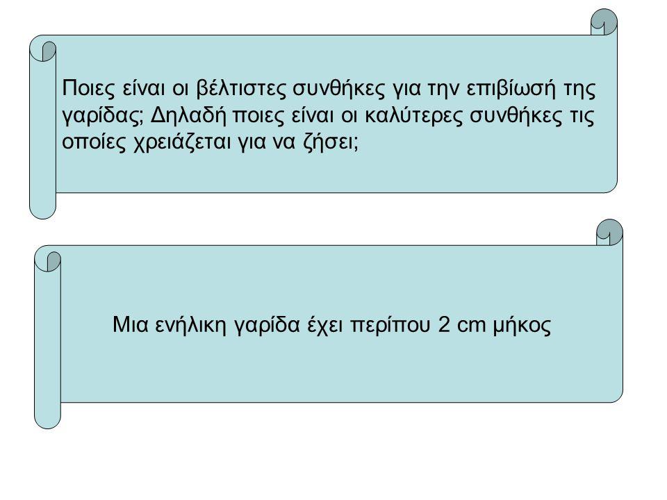 Ποιες είναι οι βέλτιστες συνθήκες για την επιβίωσή της γαρίδας; Δηλαδή ποιες είναι οι καλύτερες συνθήκες τις οποίες χρειάζεται για να ζήσει; Μια ενήλικη γαρίδα έχει περίπου 2 cm μήκος