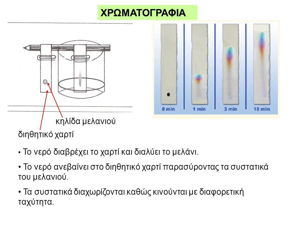 ΧΡΩΜΑΤΟΓΡΑΦΙΑ διηθητικό χαρτί κηλίδα μελανιού • Το νερό διαβρέχει το χαρτί και διαλύει το μελάνι.