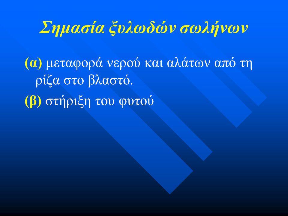 Δραστηριότητα Ζ. Ρόλος των ριζικών τριχιδίων σελ 37-38