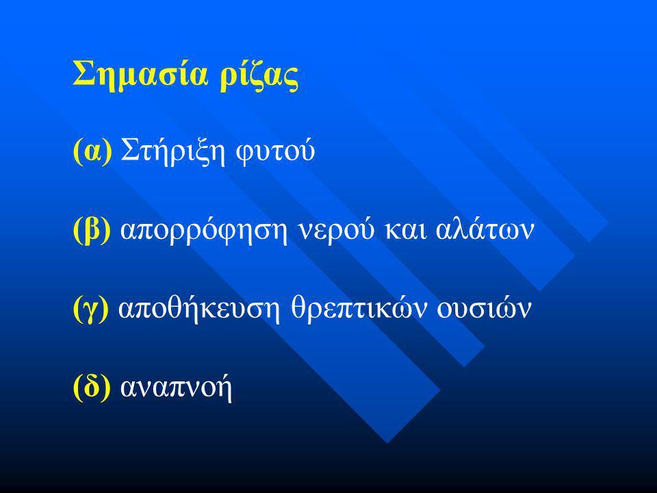 Δραστηριότητα Θ. Αναπνοή ρίζας σελ 40-41