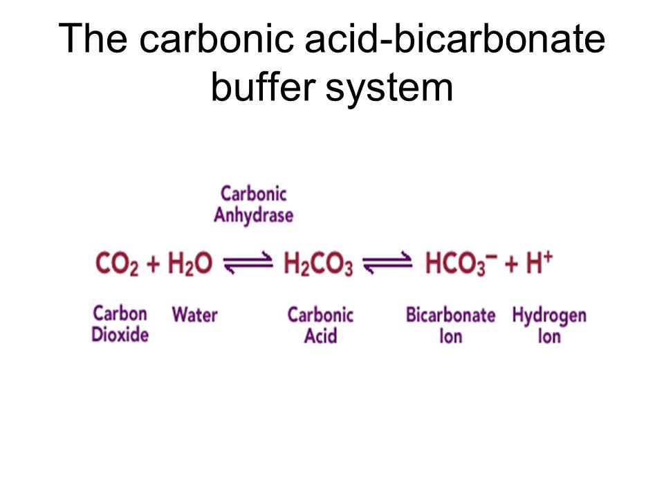 The carbonic acid-bicarbonate buffer system
