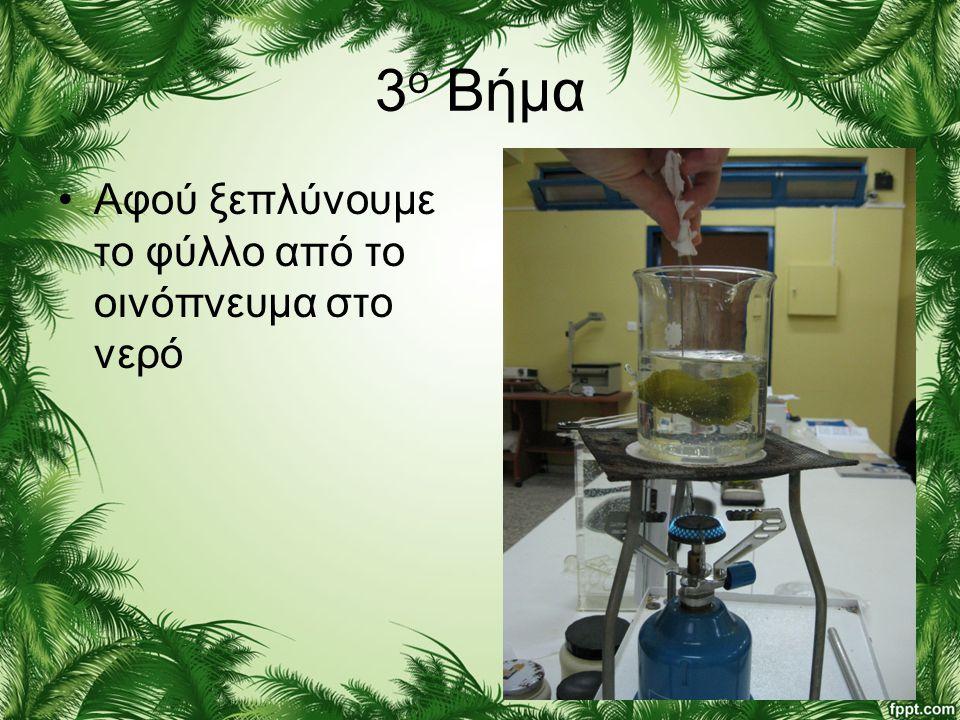 3 ο Βήμα •Αφού ξεπλύνουμε το φύλλο από το οινόπνευμα στο νερό