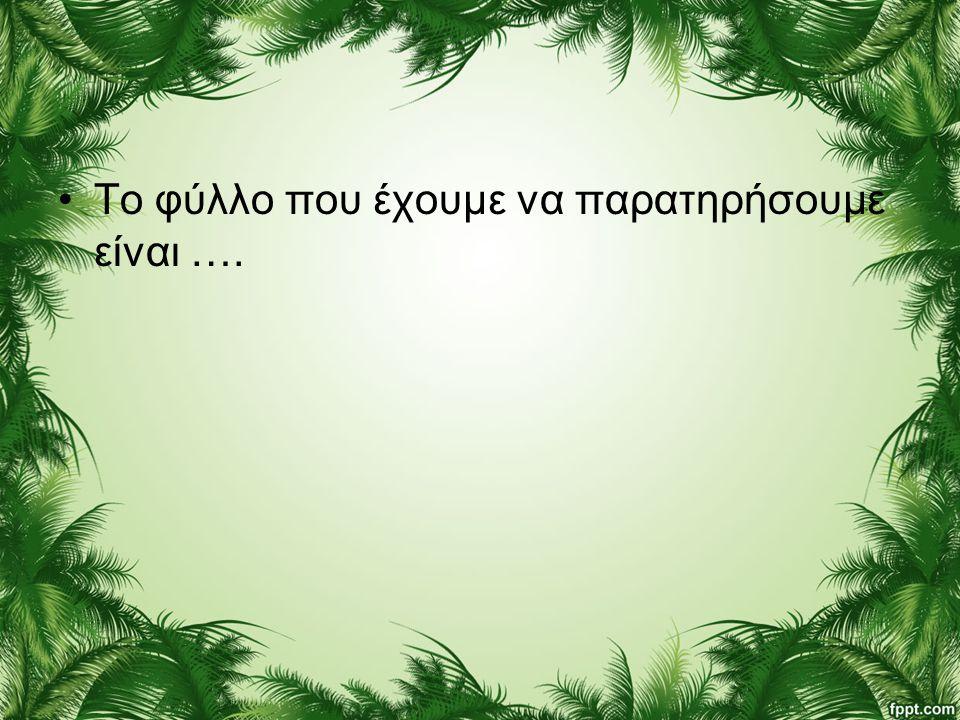 •Το φύλλο που έχουμε να παρατηρήσουμε είναι ….