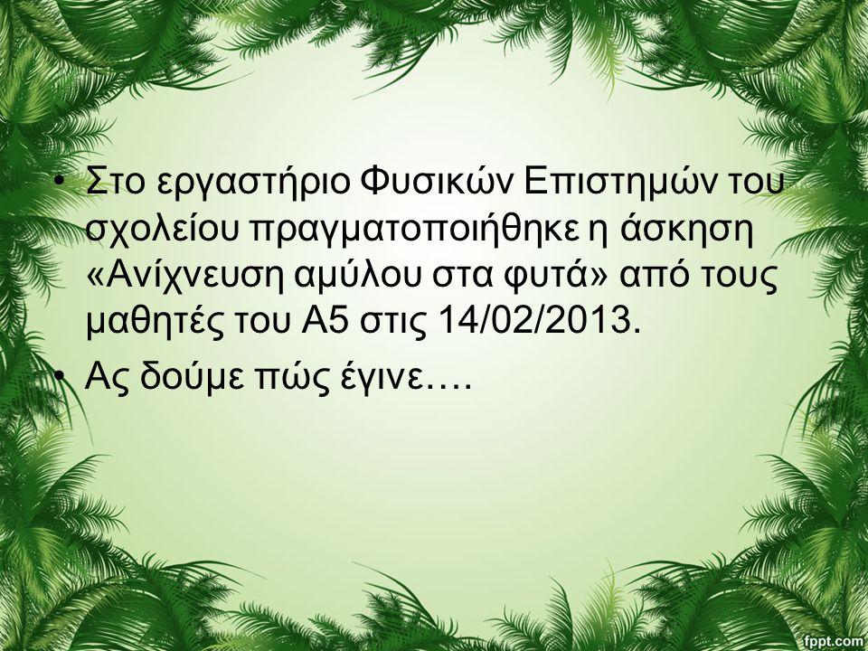 •Στο εργαστήριο Φυσικών Επιστημών του σχολείου πραγματοποιήθηκε η άσκηση «Ανίχνευση αμύλου στα φυτά» από τους μαθητές του Α5 στις 14/02/2013. •Ας δούμ