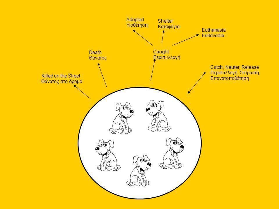 Τι χρειάζεται να γίνει; Τι;Ποιός; Παιδεία Υπεύθυνης Ιδιοκτησίας: στείρωση ιδιόκτητων σκύλων, μικροτσιπ, περίπατος με λουρί, κατανόηση ευθύνης ΜΚΟ, Αστυνομία, Δήμοι, Κτηνίατροι • ΠΣΕ σκύλων 'γειτονιάς'Δήμοι • Αφαίρεση αδέσποτων σκύλων - ευθανασίαΔήμοι • Αφαίρεση αδέσποτων σκύλων - υιοθεσίαΔήμοι • Εγκαταστάσεις για την υποδοχή ανεπιθύμητων δεσποζόμενων σκύλων υπό υπεύθυνες συνθήκες ΜΚΟ, Δήμοι