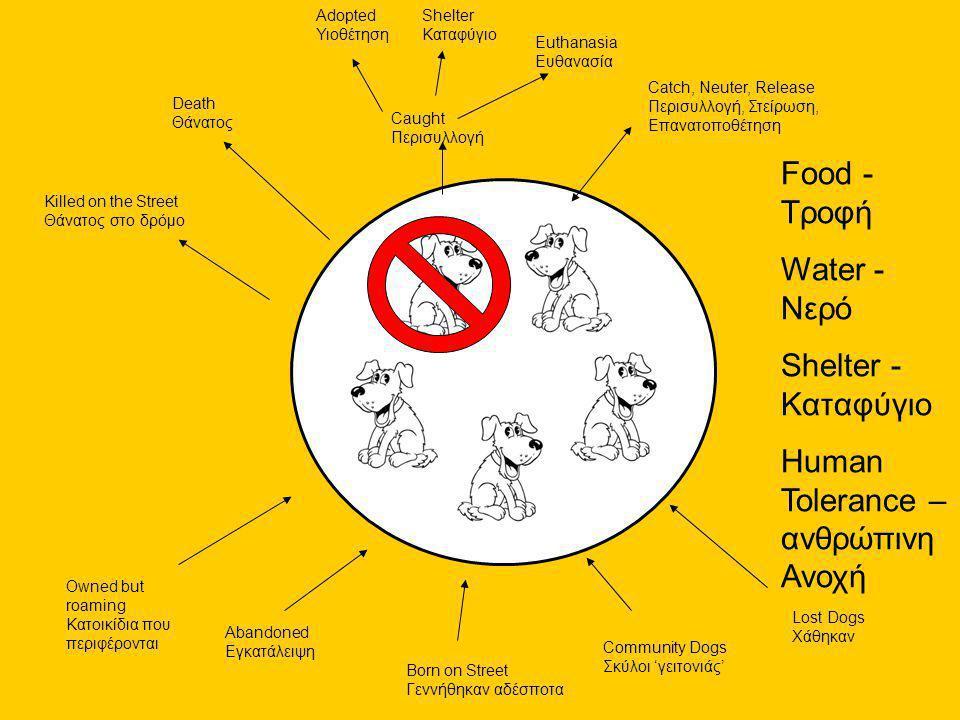Catch, Neuter, Release Περισυλλογή, Στείρωση, Επανατοποθέτηση Caught Περισυλλογή Adopted Υιοθέτηση Shelter Καταφύγιο Euthanasia Ευθανασία Death Θάνατος Killed on the Street Θάνατος στο δρόμο Food - Τροφή Water - Νερό Shelter - Καταφύγιο Human Tolerance – ανθρώπινη Ανοχή Owned but roaming Κατοικίδια που περιφέρονται Abandoned Εγκατάλειψη Born on Street Γεννήθηκαν αδέσποτα Community Dogs Σκύλοι 'γειτονιάς' Lost Dogs Χάθηκαν