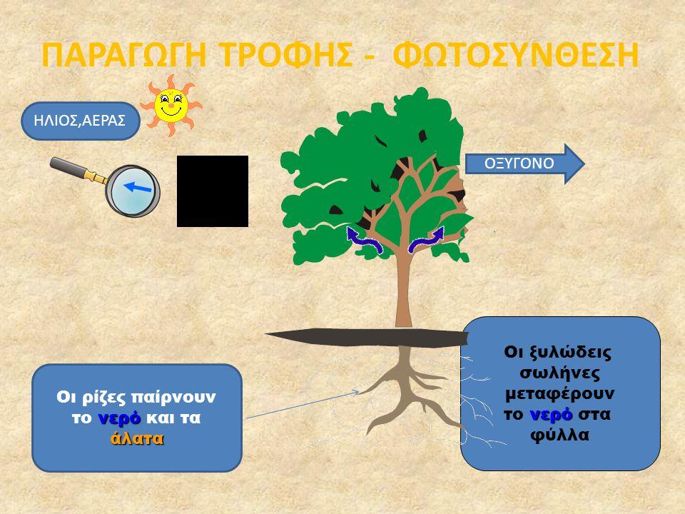 Τα φυτά, για να αναπτυχθούν, έχουν ανάγκη από αέρα, ήλιο, χώμα και νερό.