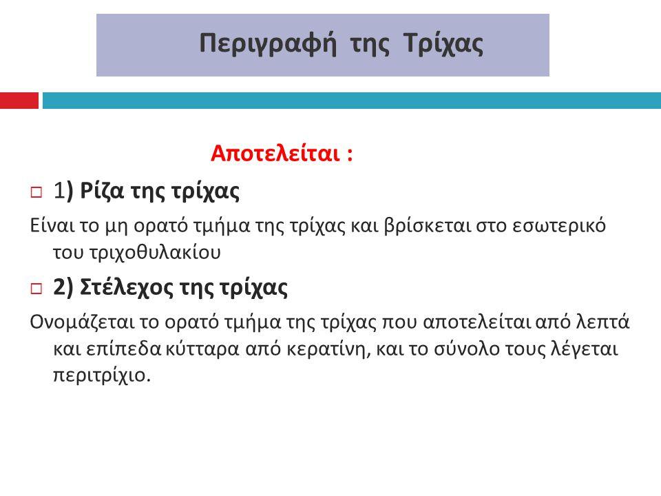 Περιγραφή της Τρίχας Αποτελείται :  1) Ρίζα της τρίχας Είναι το μη ορατό τμήμα της τρίχας και βρίσκεται στο εσωτερικό του τριχοθυλακίου  2) Στέλεχος
