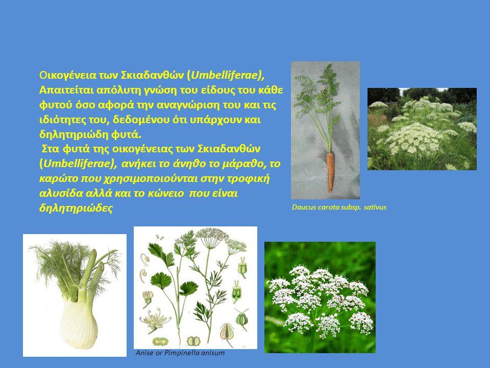 Oικογένεια των Σκιαδανθών (Umbelliferae), Απαιτείται απόλυτη γνώση του είδους του κάθε φυτού όσο αφορά την αναγνώριση του και τις ιδιότητες του, δεδομ