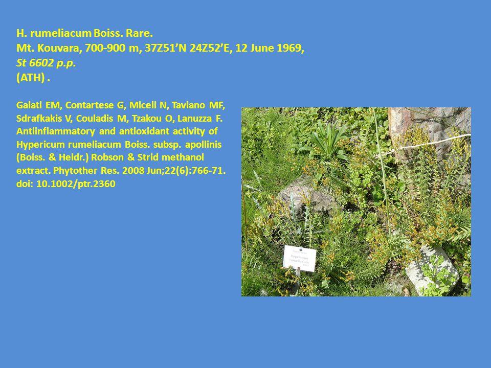 H. rumeliacum Boiss. Rare. Mt. Kouvara, 700-900 m, 37Ζ51'N 24Ζ52'E, 12 June 1969, St 6602 p.p. (ATH). Galati EM, Contartese G, Miceli N, Taviano MF, S