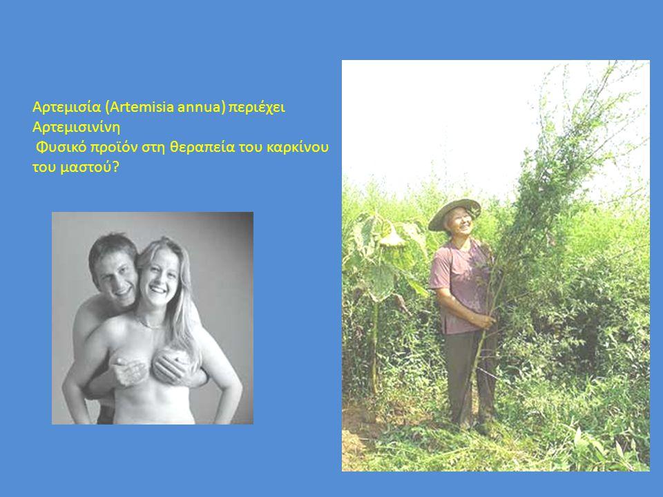 Αρτεμισία (Artemisia annua) περιέχει Αρτεμισινίνη Φυσικό προϊόν στη θεραπεία του καρκίνου του μαστού?