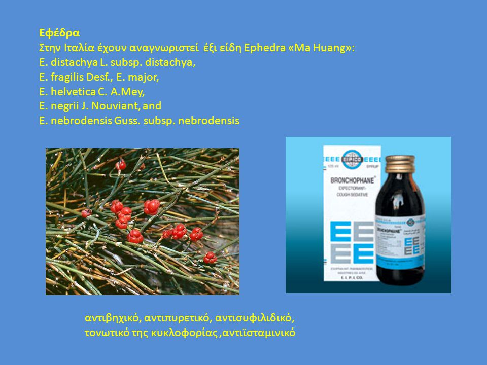 Eφέδρα Στην Ιταλία έχουν αναγνωριστεί έξι είδη Ephedra «Ma Huang»: E. distachya L. subsp. distachya, E. fragilis Desf., E. major, E. helvetica C. A.Me
