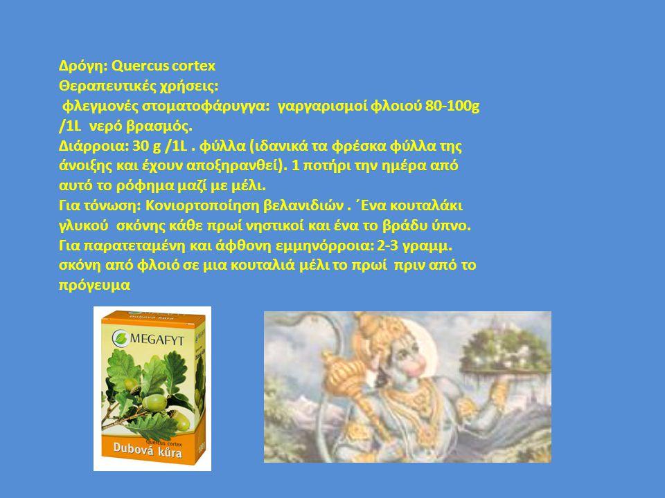 Δρόγη: Quercus cortex Θεραπευτικές χρήσεις: φλεγμονές στοματοφάρυγγα: γαργαρισμοί φλοιού 80-100g /1L νερό βρασμός. Διάρροια: 30 g /1L. φύλλα (ιδανικά