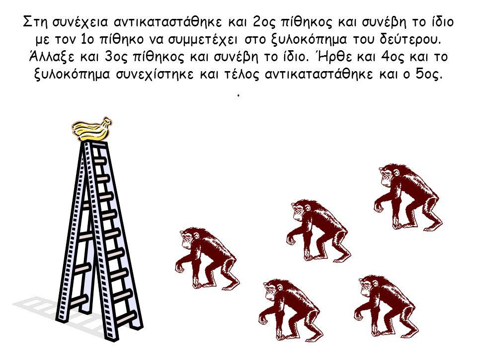 Τότε οι επιστήμονες αποφάσισαν να αντικαταστήσουν τον ένα από τους πίθηκους. Το πρώτο πράγμα που έκανε αυτός ο νέος πίθηκος ήταν να ανέβει στη σκάλα.