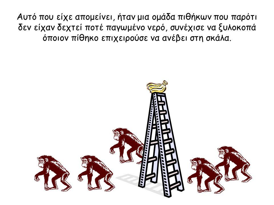 Αυτό που είχε απομείνει, ήταν μια ομάδα πιθήκων που παρότι δεν είχαν δεχτεί ποτέ παγωμένο νερό, συνέχισε να ξυλοκοπά όποιον πίθηκο επιχειρούσε να ανέβει στη σκάλα.