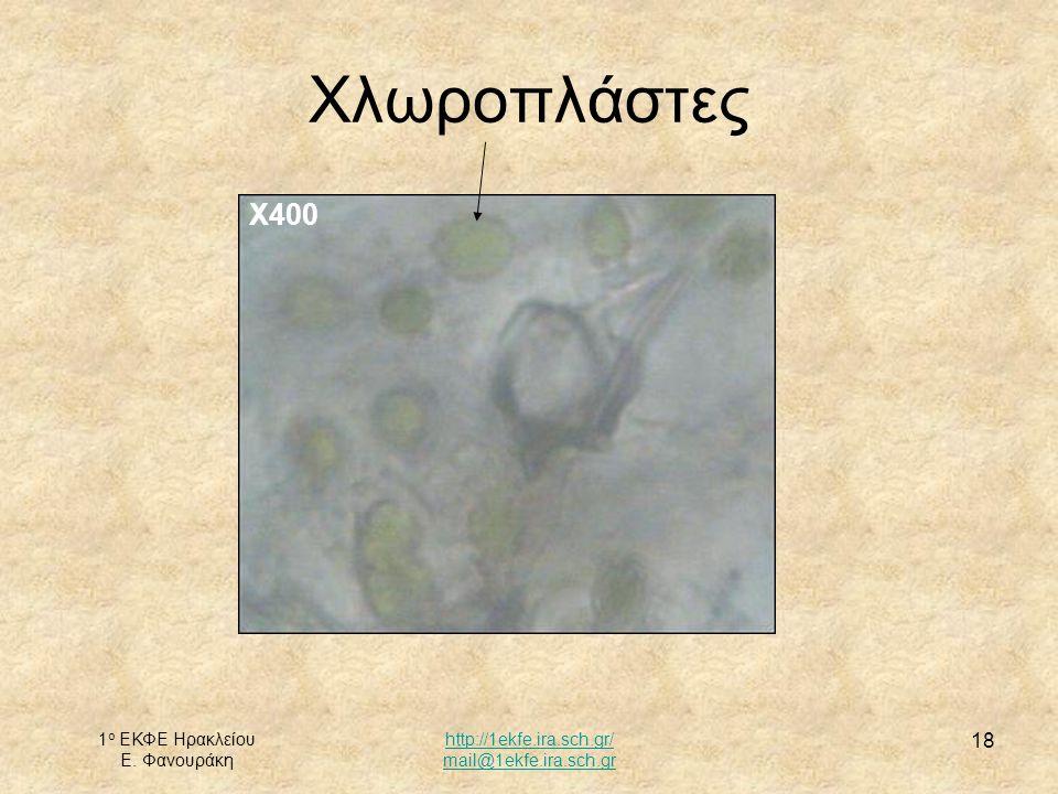 1 ο ΕΚΦΕ Ηρακλείου Ε. Φανουράκη http://1ekfe.ira.sch.gr/ mail@1ekfe.ira.sch.gr 18 Χλωροπλάστες Χ400