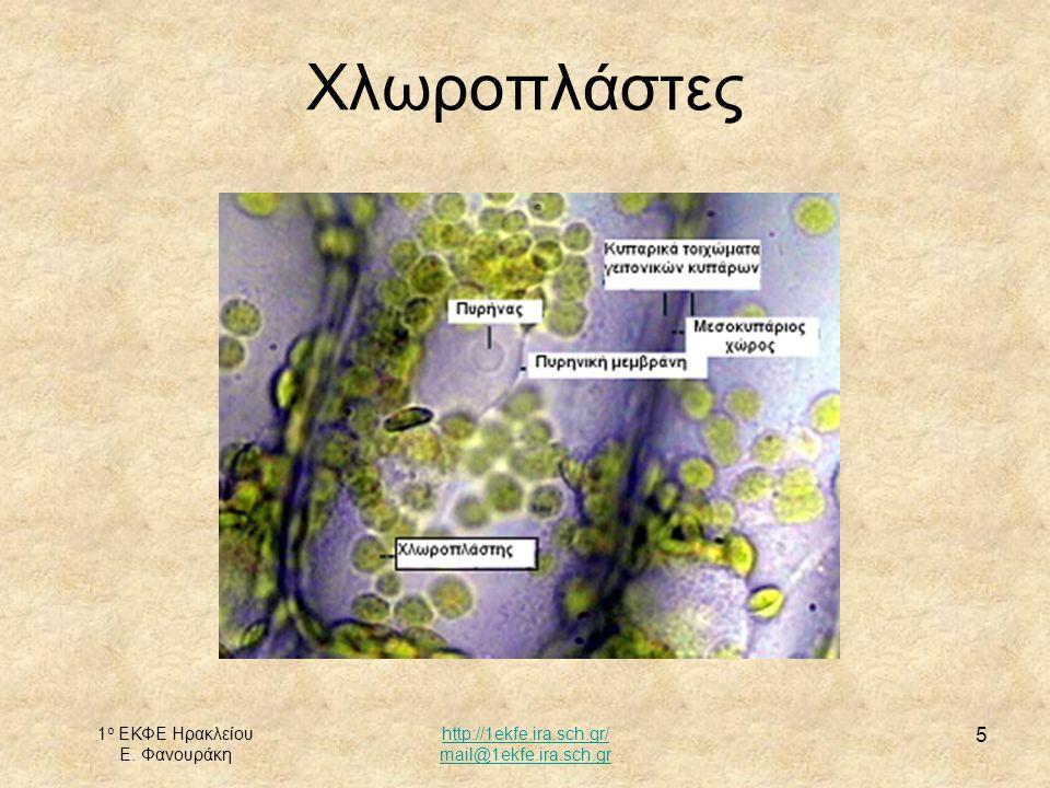 1 ο ΕΚΦΕ Ηρακλείου Ε. Φανουράκη http://1ekfe.ira.sch.gr/ mail@1ekfe.ira.sch.gr 5 Χλωροπλάστες
