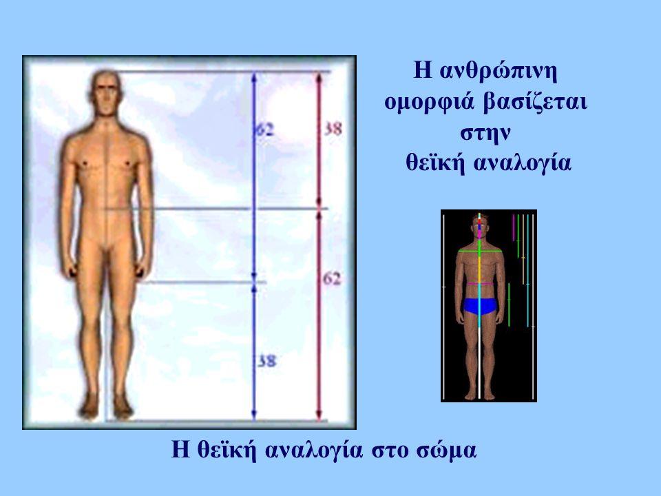 H ανθρώπινη ομορφιά βασίζεται στην θεϊκή αναλογία Η θεϊκή αναλογία στο σώμα