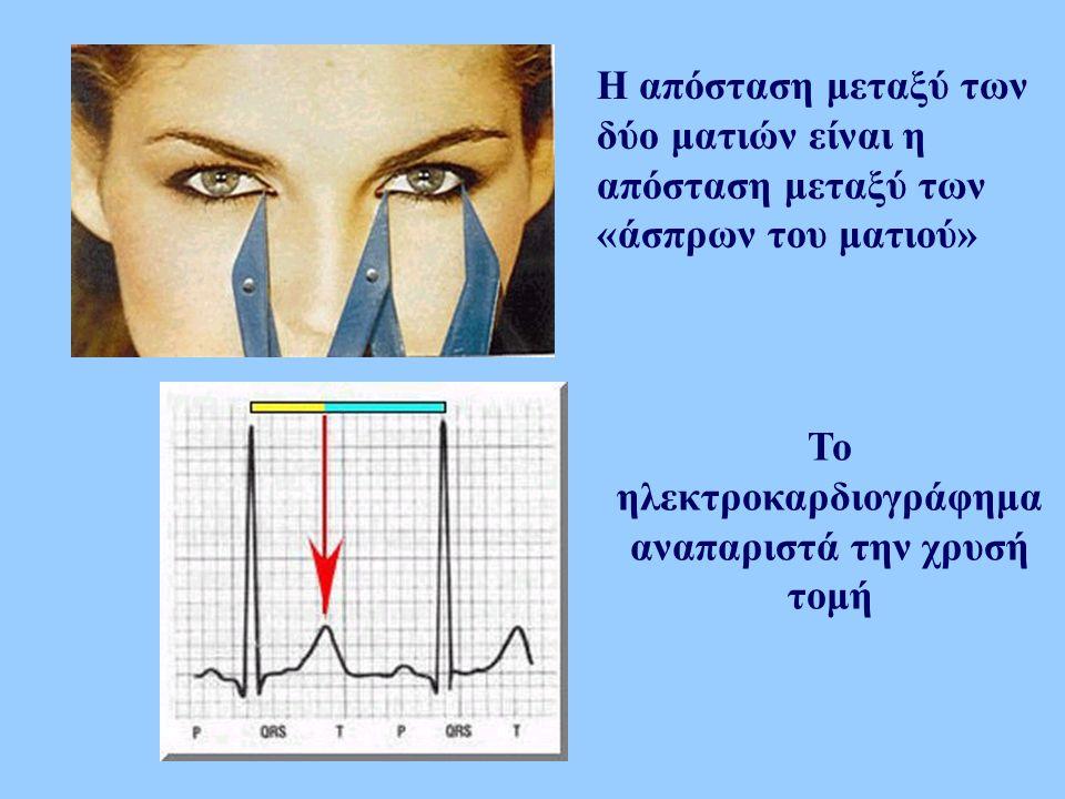 Η απόσταση μεταξύ των δύο ματιών είναι η απόσταση μεταξύ των «άσπρων του ματιού» Το ηλεκτροκαρδιογράφημα αναπαριστά την χρυσή τομή