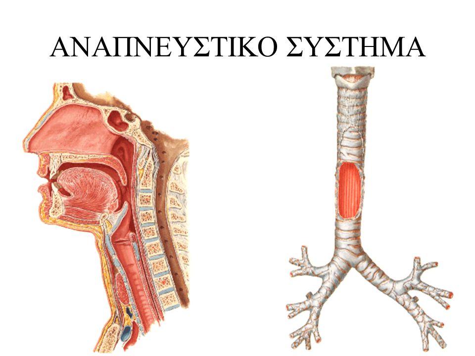 ΕΛΕΓΧΟΣ ΑΕΡΑΓΩΓΟΥ •Ομιλία •Αυτόματη αναπνοή •Έλεγχος βατότητας αεραγωγού μέσω εμφύσησης (τεχνική όμοια με της τεχνητής αναπνοής)
