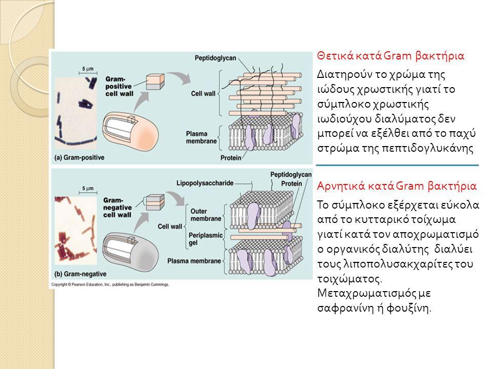 Θετικά κατά Gram βακτήρια Διατηρούν το χρώμα της ιώδους χρωστικής γιατί το σύμπλοκο χρωστικής ιωδιούχου διαλύματος δεν μπορεί να εξέλθει από το παχύ στρώμα της πεπτιδογλυκάνης Αρνητικά κατά Gram βακτήρια Το σύμπλοκο εξέρχεται εύκολα από το κυτταρικό τοίχωμα γιατί κατά τον αποχρωματισμό ο οργανικός διαλύτης διαλύει τους λιποπολυσακχαρίτες του τοιχώματος.
