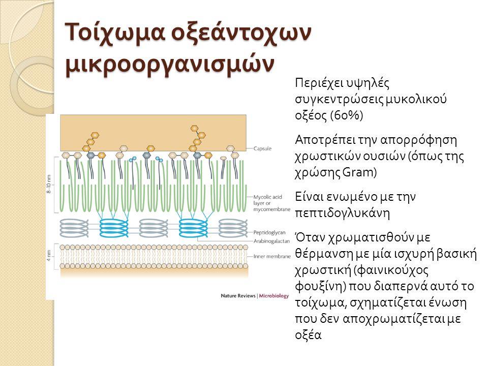 Τοίχωμα οξεάντοχων μικροοργανισμών Περιέχει υψηλές συγκεντρώσεις μυκολικού οξέος (60%) Αποτρέπει την απορρόφηση χρωστικών ουσιών ( όπως της χρώσης Gra