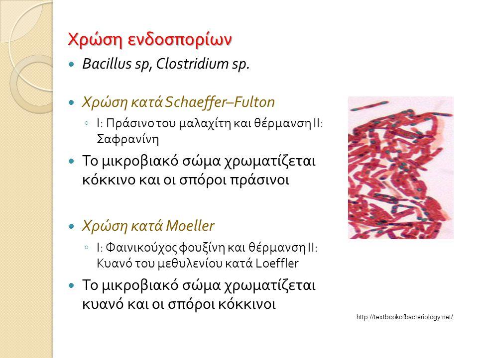 Χρώση ενδοσπορίων  Bacillus sp, Clostridium sp.  Χρώση κατά Schaeffer–Fulton ◦ Ι : Πράσινο του μαλαχίτη και θέρμανση ΙΙ : Σαφρανίνη  Το μικροβιακό