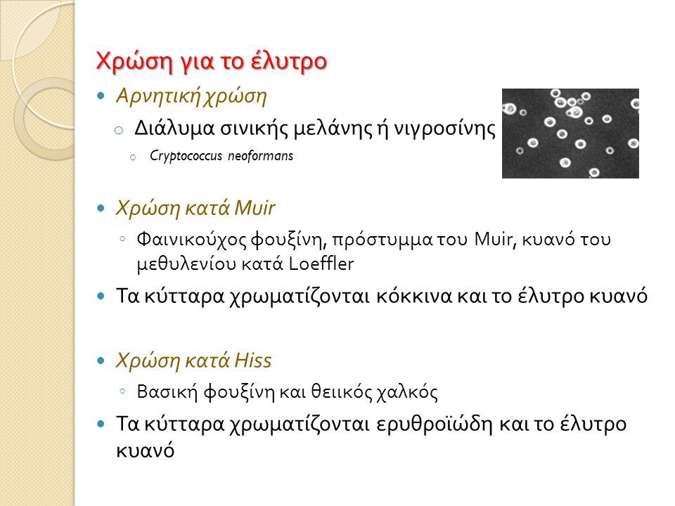 Χρώση για το έλυτρο  Αρνητική χρώση o Διάλυμα σινικής μελάνης ή νιγροσίνης o Cryptococcus neoformans  Χρώση κατά Muir ◦ Φαινικούχος φουξίνη, πρόστυμμα του Muir, κυανό του μεθυλενίου κατά Loeffler  Τα κύτταρα χρωματίζονται κόκκινα και το έλυτρο κυανό  Χρώση κατά Hiss ◦ Βασική φουξίνη και θειικός χαλκός  Τα κύτταρα χρωματίζονται ερυθροϊώδη και το έλυτρο κυανό