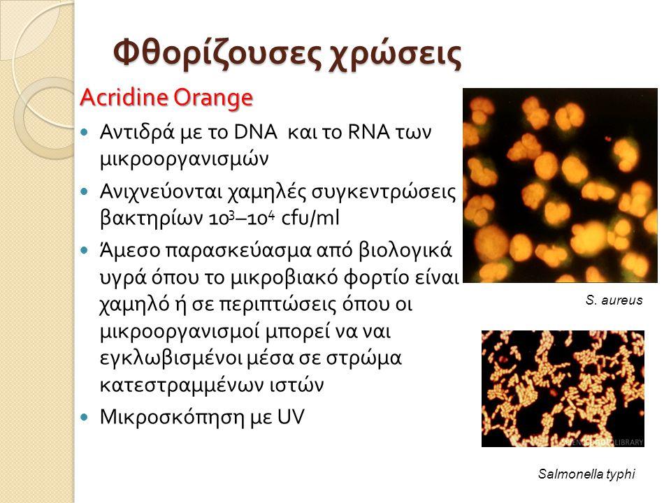 Φθορίζουσες χρώσεις Acridine Orange  Αντιδρά με το DNA και το RNA των μικροοργανισμών  Ανιχνεύονται χαμηλές συγκεντρώσεις βακτηρίων 10 3 –10 4 cfu / ml  Άμεσο παρασκεύασμα από βιολογικά υγρά όπου το μικροβιακό φορτίο είναι χαμηλό ή σε περιπτώσεις όπου οι μικροοργανισμοί μπορεί να ναι εγκλωβισμένοι μέσα σε στρώμα κατεστραμμένων ιστών  Μικροσκόπηση με UV Salmonella typhi S.