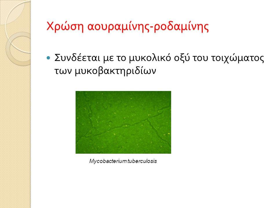 Χρώση αουραμίνης - ροδαμίνης  Συνδέεται με το μυκολικό οξύ του τοιχώματος των μυκοβακτηριδίων Mycobacterium tuberculosis