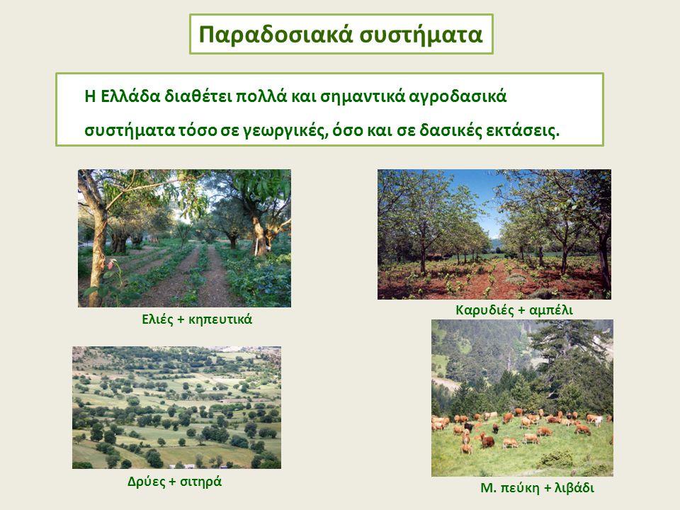 Παραδοσιακά συστήματα Ελιές + κηπευτικά Καρυδιές + αμπέλι Δρύες + σιτηρά Μ. πεύκη + λιβάδι Η Ελλάδα διαθέτει πολλά και σημαντικά αγροδασικά συστήματα