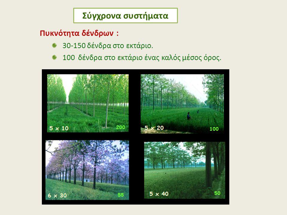 Πυκνότητα δένδρων : 30-150 δένδρα στο εκτάριο. 100 δένδρα στο εκτάριο ένας καλός μέσος όρος. Σύγχρονα συστήματα