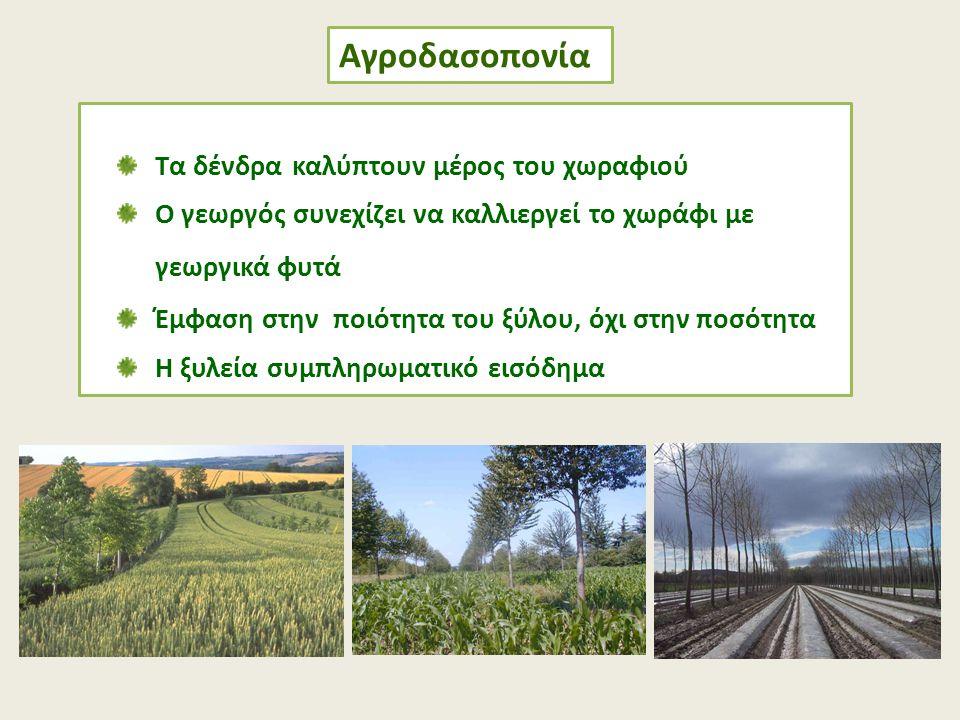 Αγροδασοπονία Τα δένδρα καλύπτουν μέρος του χωραφιού Ο γεωργός συνεχίζει να καλλιεργεί το χωράφι με γεωργικά φυτά Έμφαση στην ποιότητα του ξύλου, όχι