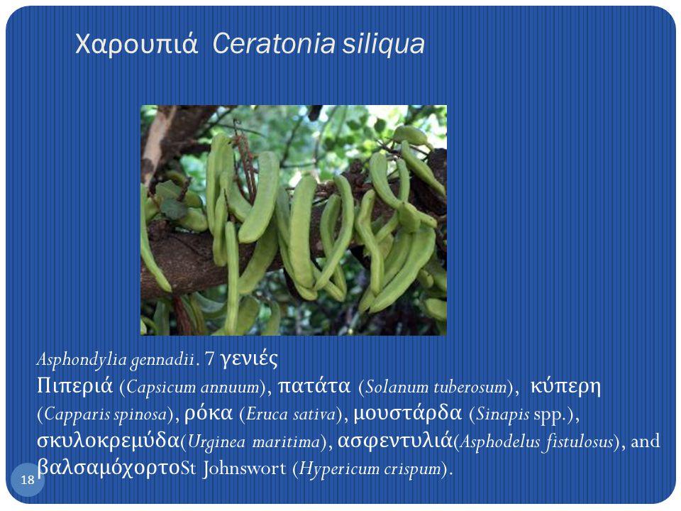 17 Euphorbia helioscopia Κάπαρη Βιοποικιλότητα