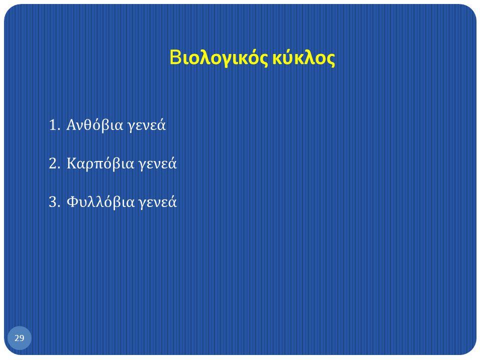 2. Πυρηνοτρήτης της ελιάς, Prays oleae 28
