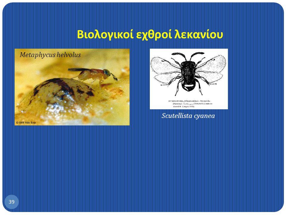Αντιμετώπιση 38 1.Κλάδεμα και καλός αερισμός 2.Προστασία βιολογικών εχθρών