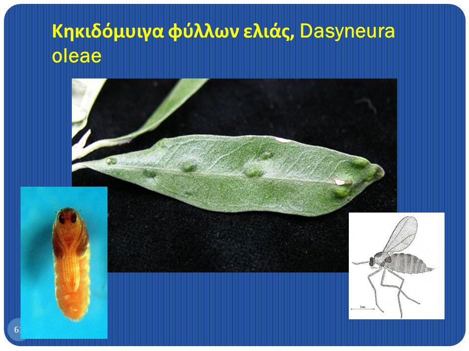 Ακαρι της ελιάς, Aceria oleae 60