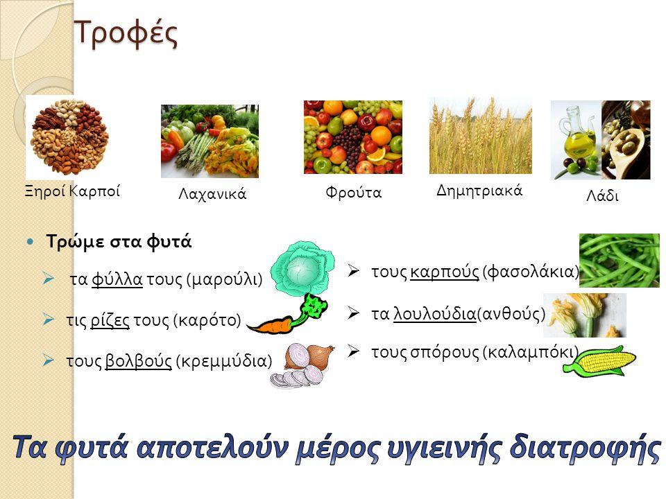 Τροφές  Τρώμε στα φυτά  τα φύλλα τους ( μαρούλι )  τις ρίζες τους ( καρότο )  τους βολβούς ( κρεμμύδια ) Λαχανικά Φρούτα Δημητριακά Λάδι Ξηροί Καρποί  τους καρπούς ( φασολάκια )  τα λουλούδια ( ανθούς )  τους σπόρους ( καλαμπόκι )