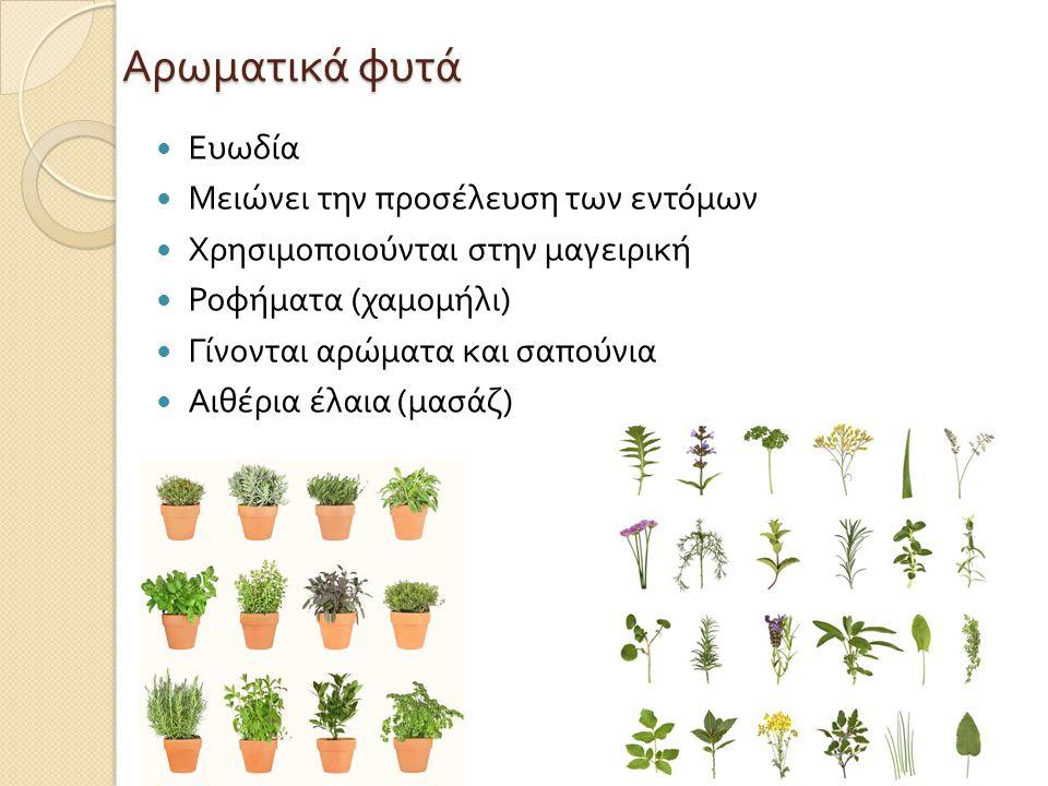 Αρωματικά φυτά  Ευωδία  Μειώνει την προσέλευση των εντόμων  Χρησιμοποιούνται στην μαγειρική  Ροφήματα ( χαμομήλι )  Γίνονται αρώματα και σαπούνια  Αιθέρια έλαια ( μασάζ )