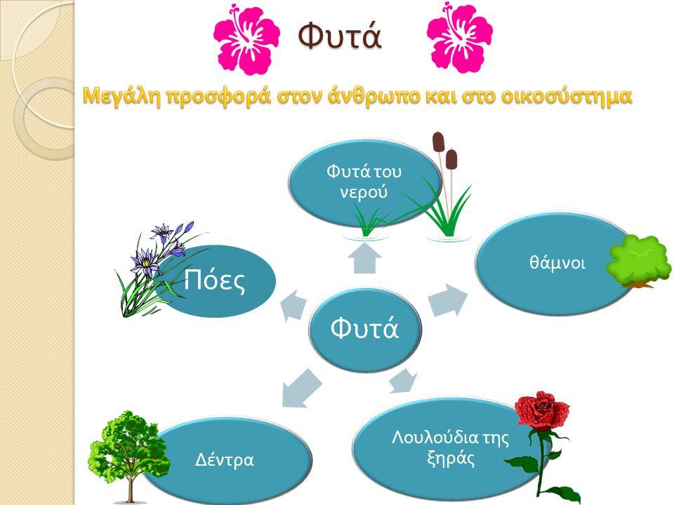 Φυτά του νερού  Διασπούν το διοξείδιο του άνθρακα και παράγουν οξυγόνο, πολύ περισσότερο από αυτό που προέρχεται από τεχνικά μέσα.