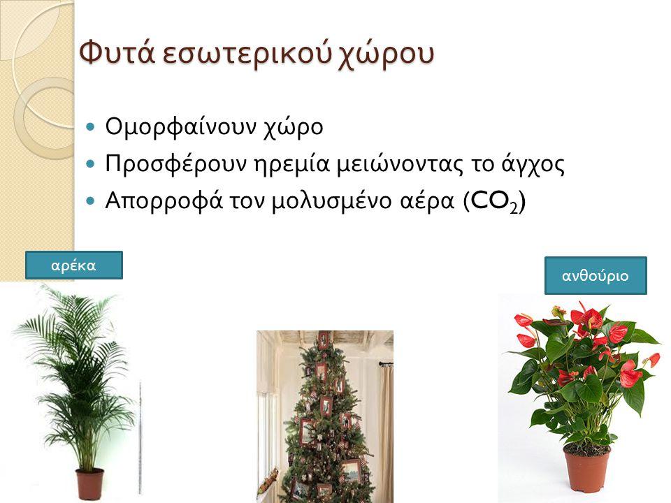 Φυτά εσωτερικού χώρου  Ομορφαίνουν χώρο  Προσφέρουν ηρεμία μειώνοντας το άγχος  Απορροφά τον μολυσμένο αέρα (CO 2 ) αρέκα ανθούριο