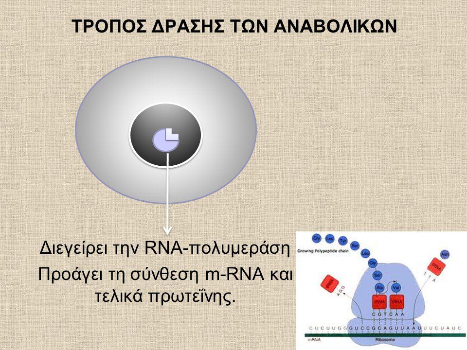 ΤΡΟΠΟΣ ΔΡΑΣΗΣ ΤΩΝ ΑΝΑΒΟΛΙΚΩΝ Διεγείρει την RNA-πολυμεράση Προάγει τη σύνθεση m-RNA και τελικά πρωτεΐνης.