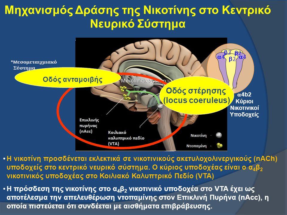 Μηχανισμός Δράσης της Νικοτίνης στο Κεντρικό Νευρικό Σύστημα 44 22 22 22 44  4b2 Κύριοι Νικοτινικοί Υποδοχείς *Μ εσομεταιχμιακό Σύστημα * Ο