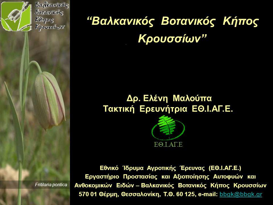  Ίδρυση Ελληνικού Δικτύου Βοτανικών Κήπων Στόχος 16 πάρκα διάσωσης της χλωρίδας την εθνική τράπεζα γενετικού υλικού άλλους Βοτανικούς Κήπους της Ελλάδας Διατηρούμε επαφή με: συλλογές φυτών Πανεπιστημίων ιδιωτικές συλλογές φυτών τη BGCI (Botanic Gardens Conservation International) κυβερνητικούς φορείς και οργανώσεις Συνεργαζόμαστε με: Ενέργειες του ΒΒΚΚ-ΕΘΙΑΓΕ σε περιφερειακό επίπεδο Παγκόσμια Στρατηγική Προστασίας και Διάσωσης της Χλωρίδας Σχέδιο Δράσης για το 2011-2020